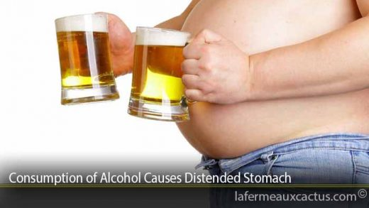Consumption of Alcohol Causes Distended Stomach